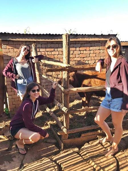 Vache achetée par Ilaria, Giulia et Morgane